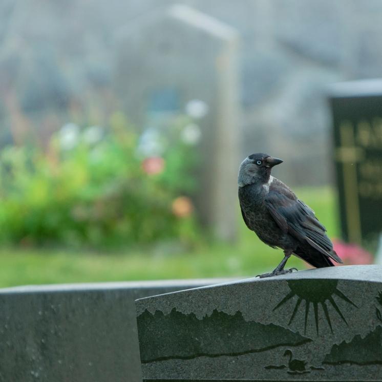 Besök på gravgården
